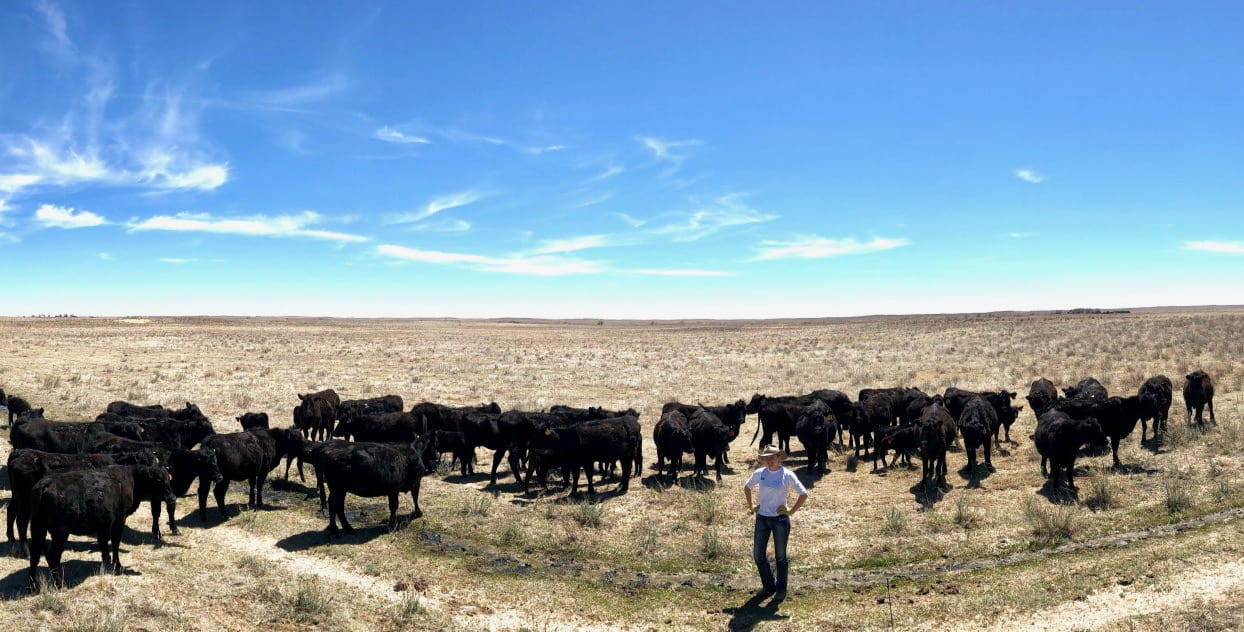 Alice with cattle